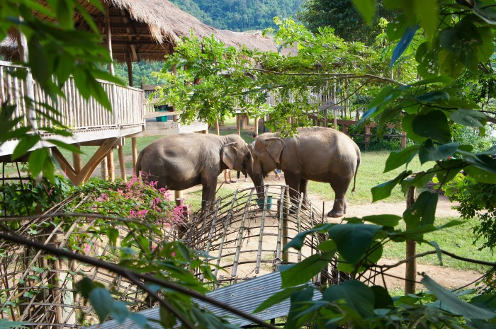 A week at Elephant Nature Park, or how I learned to stop worrying and lovevoluntourism